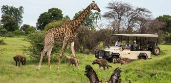 Affordable honeymoon destinations-African Safari