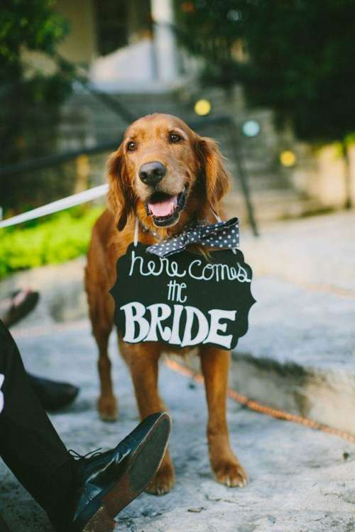 How to Celebrate Weddings With Dogs, How to Include Your Dog In Your Wedding, Wedding TIps and Tricks, Wedding Planning 101, Dream Wedding, Dream Wedding Tips and Tricks