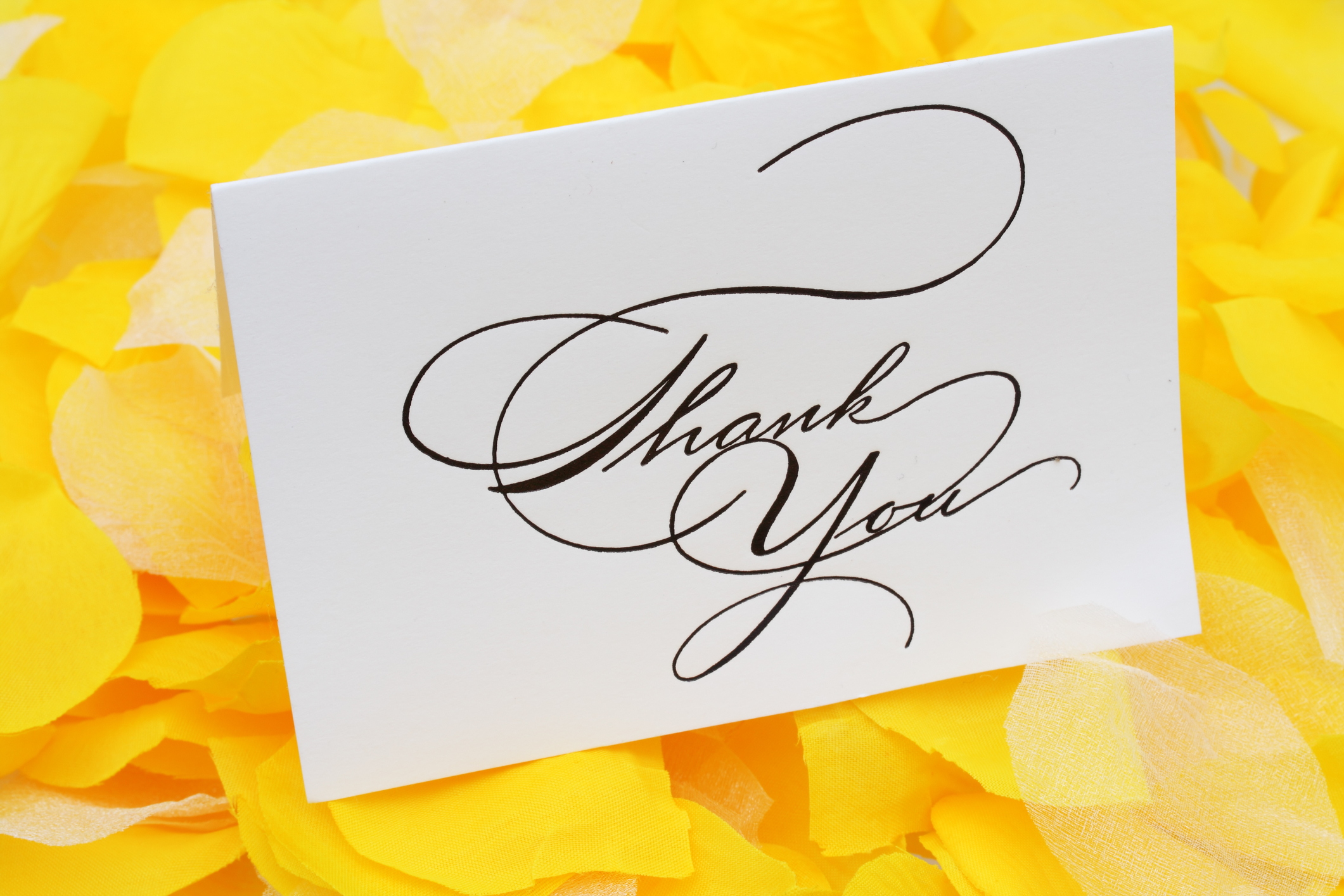 wedding thank you card wording-thank you card on yellow flower petals